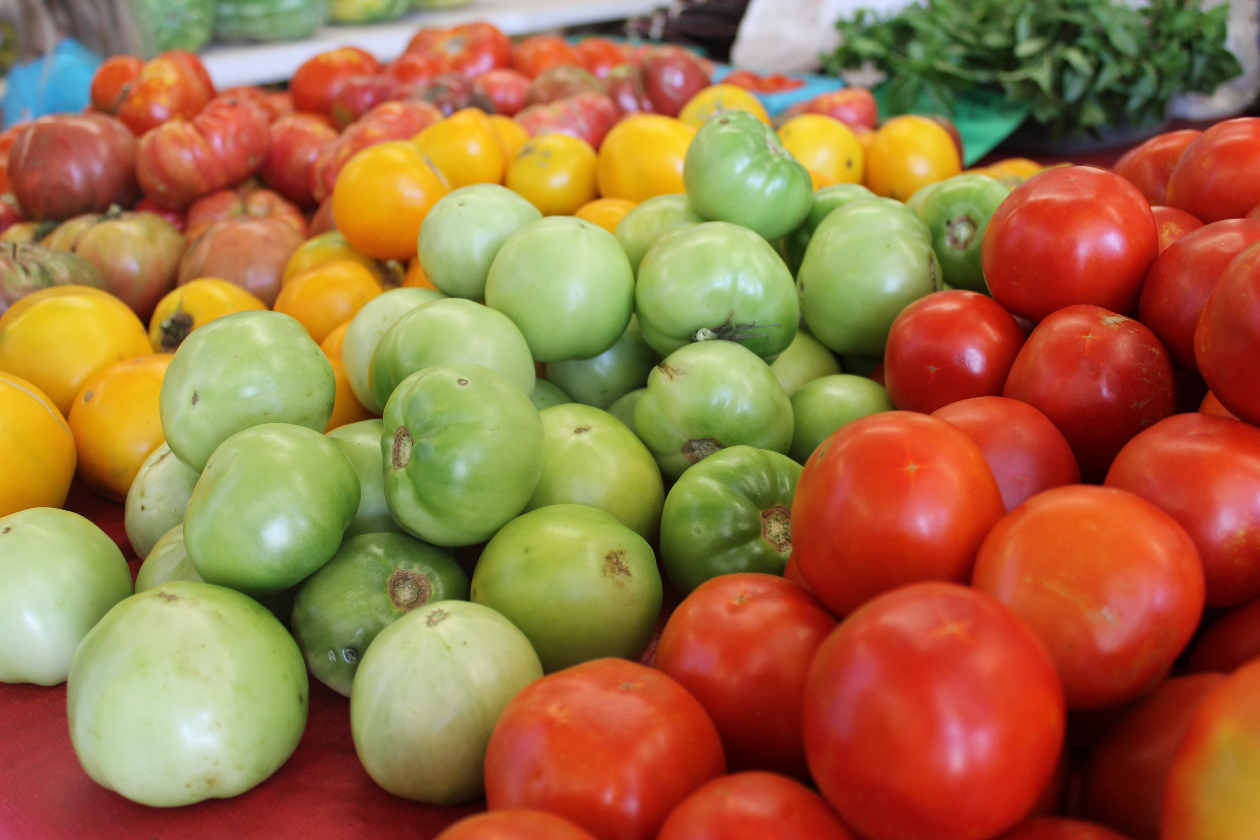 Farmers Markets Tomatoes