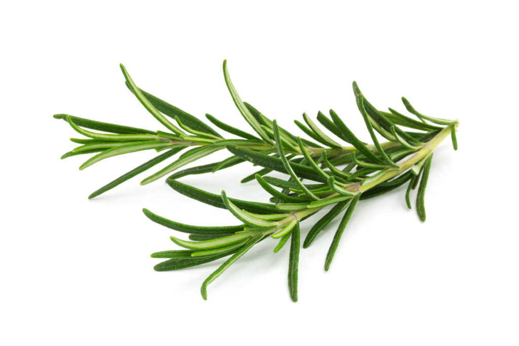 This image has an empty alt attribute; its file name is AdobeStock_59928572-fresh-rosemary-1024x683.jpeg