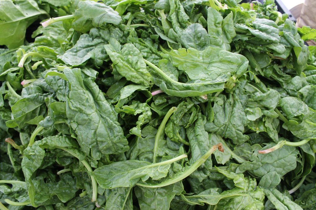 Crinkly savoy spinach from the Norman Farm Market